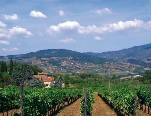 Azienda Agricola il Prato